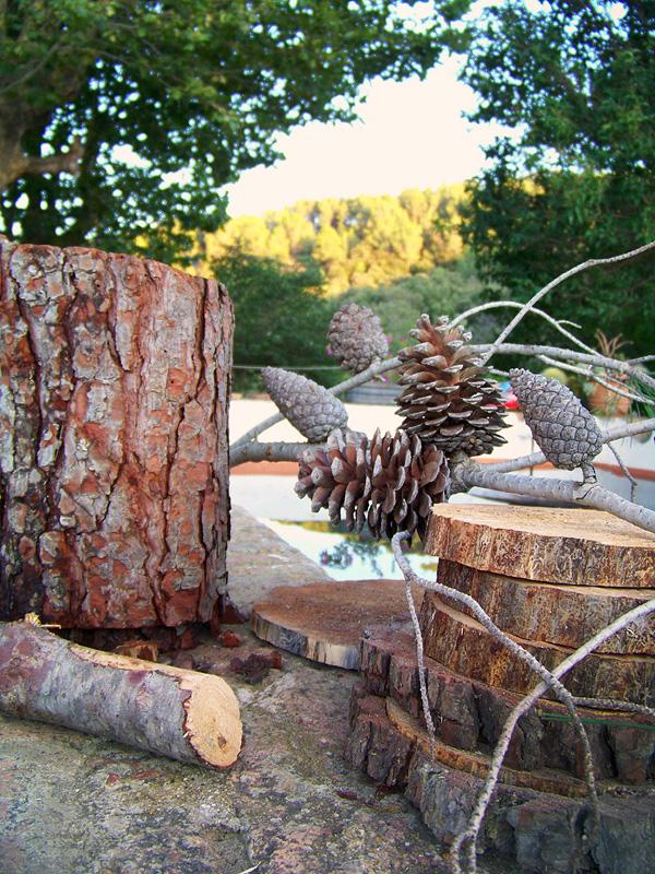 piñas y troncos